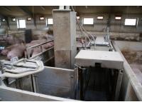 Stacje paszowe (Electronic Sow Feeding)
